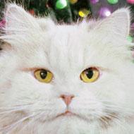 Кошки Юрия Куклачёва
